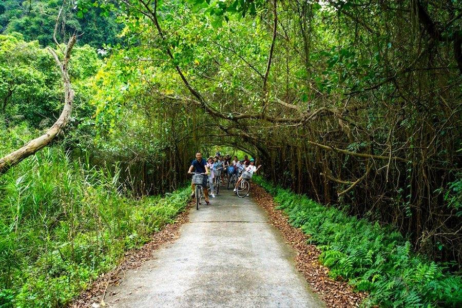 Đạp xe xuyên rừng trên Đảo Cát Bà