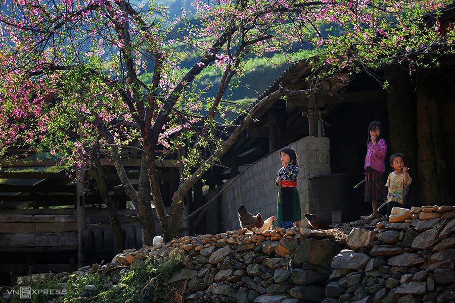 Mùa hoa đào nở ở Hà Giang